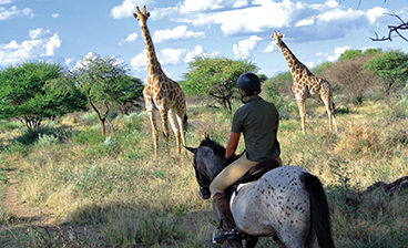 thumb_riding-safaris.jpg